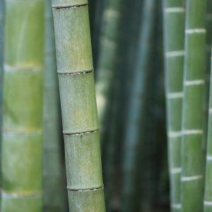 bamboo-919052_1920